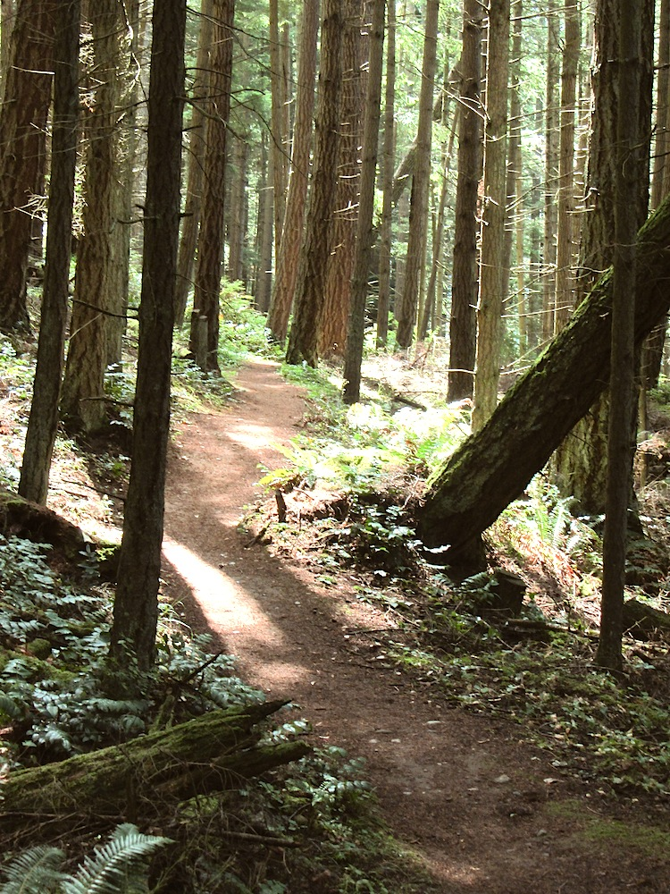 Chuckanut Trails